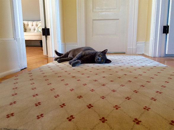 Carousel Floors Los Angeles Carpet Professionals